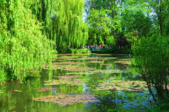 Water lily pong monet garden giverny