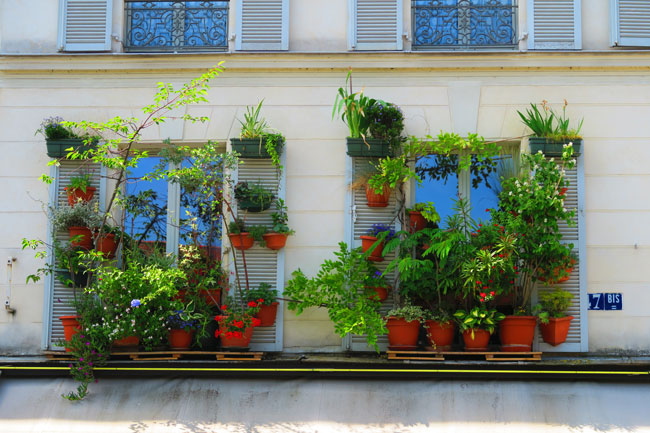 Classic paris windows with plants - canal saint martin