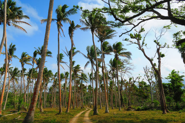 Efate Island Road