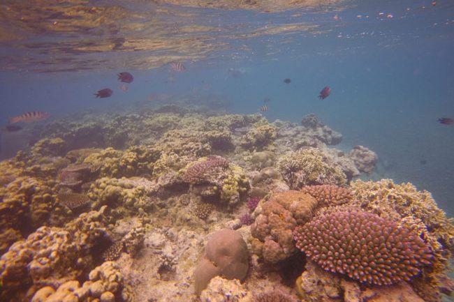 Hideaway Island Vanuatu reef