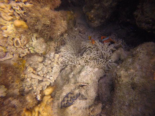 Hideaway Island Vanuatu snorkeling