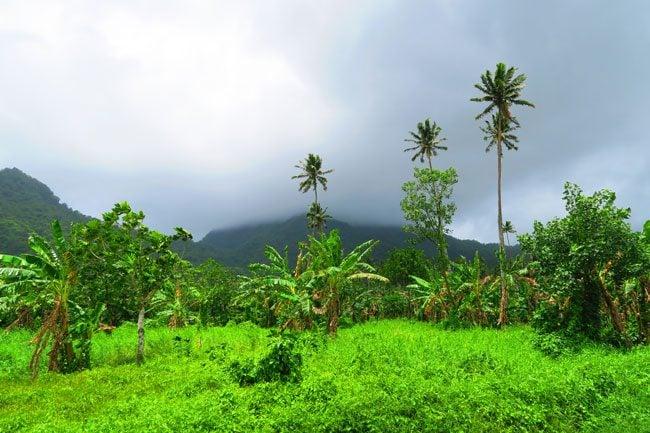 Lalumano driving through highlands Samoa