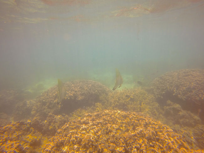 Namua Island Samoa snorkeling