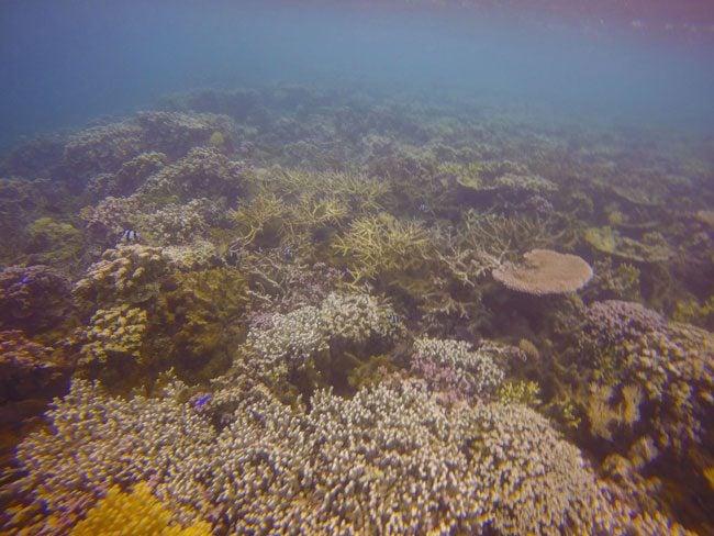 Palolo Deep Marine Reeserve Apia Samoa underwater