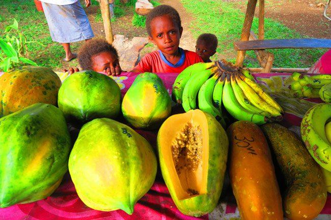 Papaya in Santo Vanuatu