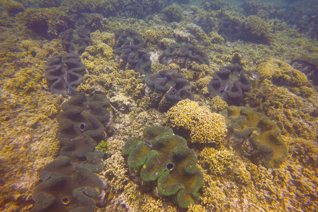 Savaia Giant Clam Beach Samoa