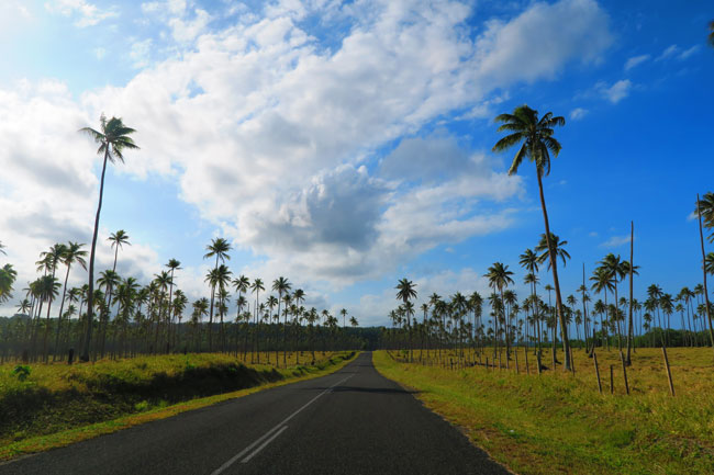 South Pacific Palm Trees in Vanuatu