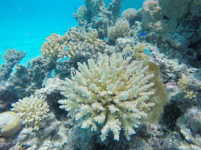 Coral and fish in Aitutaki lagoon
