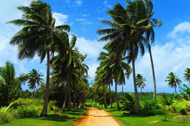 Country road in Aitutaki Cook Islands