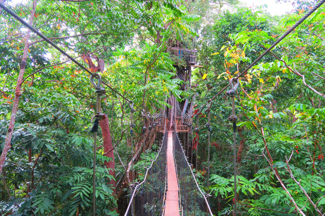 Falealupo Village Savaii Samoa canopy walk