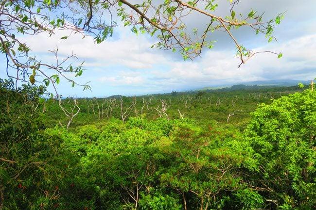 Falealupo Village Savaii Samoa view from giant banyan canopy walk