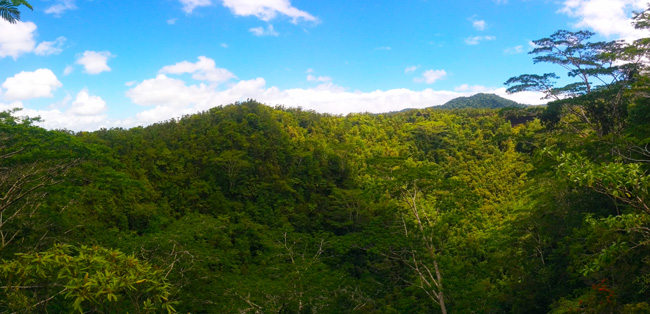 Mount Matavanu Crater Savaii Samoa - panoramic view