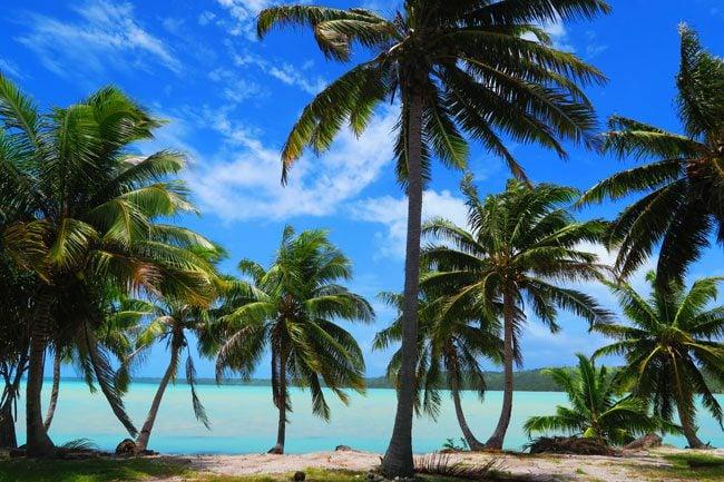 Plam trees in Aitutaki lagoon Cook Islands