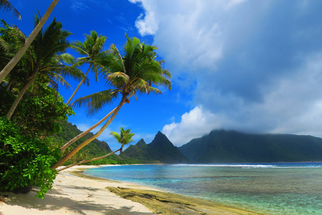 Plam trees in Ofu Tropical Beach American Samoa