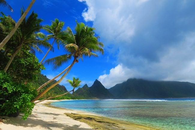 Plam trees in Ofu Tropical Beach American Samoa