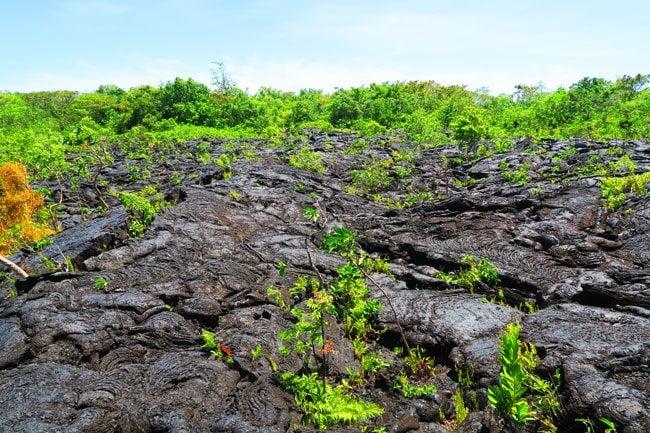 Saleaula Lava Fields Savaii Samoa