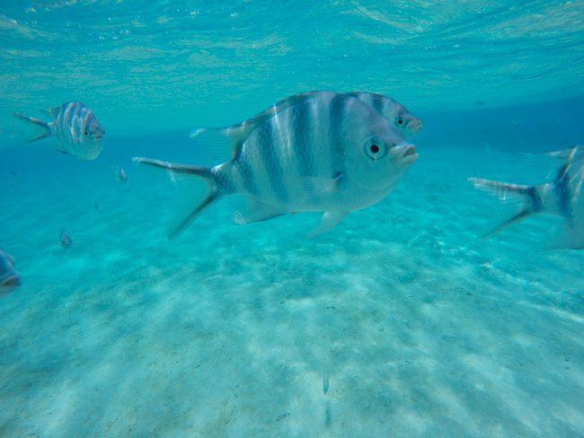 Tropical fish in Aitutaki lagoon
