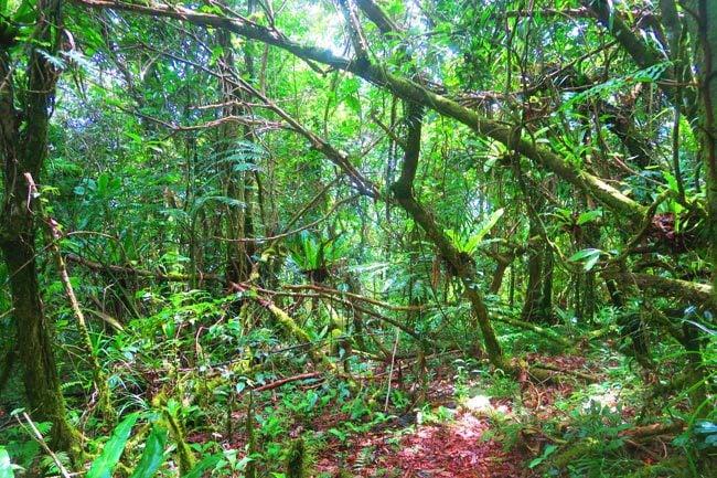 Tropical rainforest in Ofu Island American Samoa