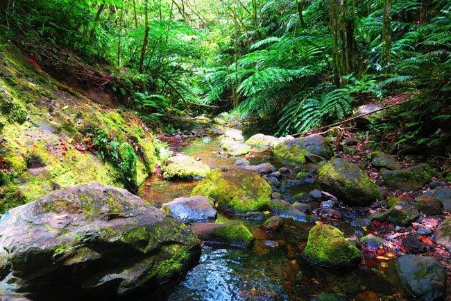 Cross Island Track Rarotonga Cook Islands water stream