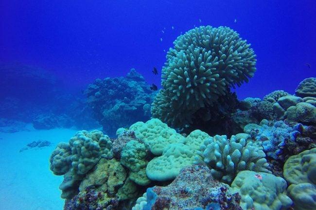 Diving in Rarotonga Cook Islands