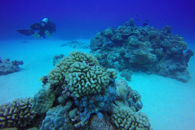 Diving in Rarotonga Cook Islands hard coral blue sea