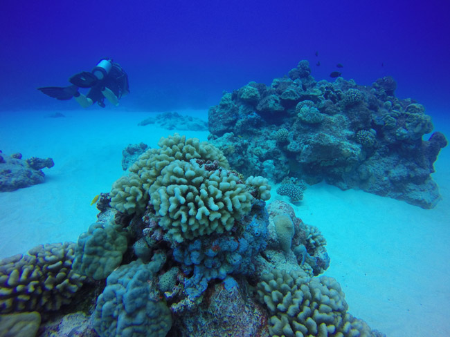 Diving in Rarotonga Cook Islands hard coral blue sea
