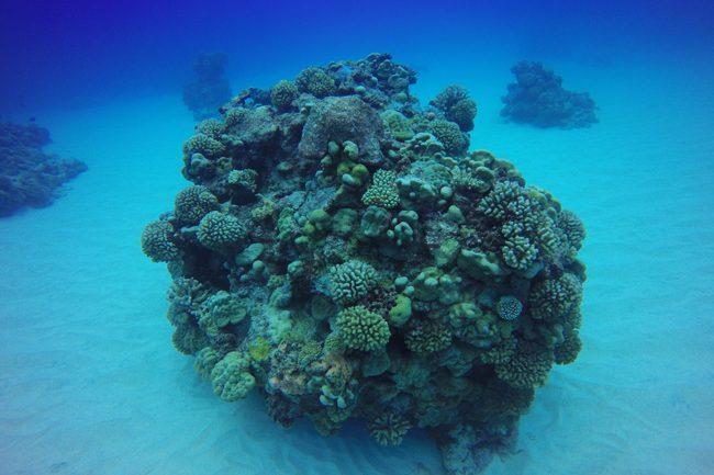 Diving in Rarotonga Cook Islands hard coral on sandy bottom
