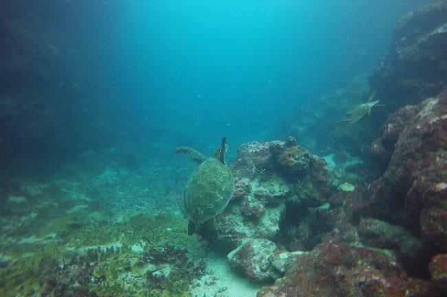 Diving in Rarotonga Cook Islands sea turtles