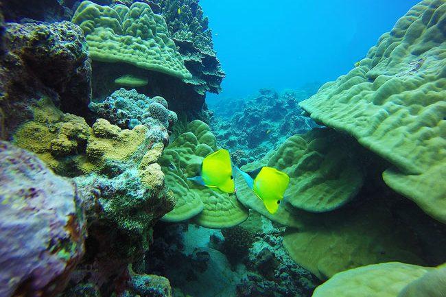 Diving in Rarotonga Cook Islands tropical fish