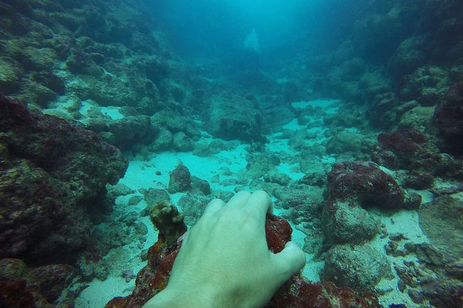 Diving through lagoon passage in Rarotonga Cook Islands