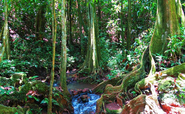 Mape forest in Vaihapi gardens Tahiti French Polynesia