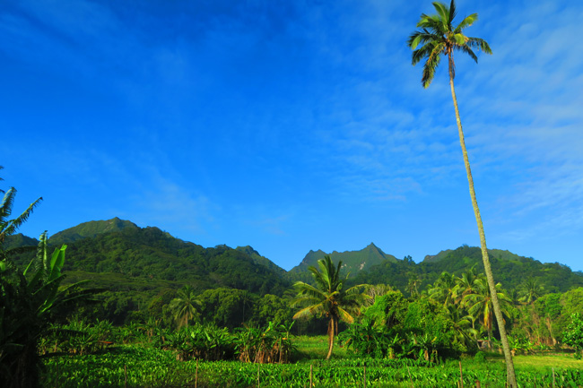 Rarotonga Mountain view with palm tree cook islands