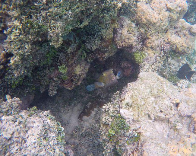 Snorkeling in Muri Lagoon Rarotonga Cook Islands