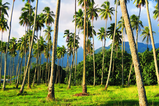 Tahiti Mountains and palm trees French Polynesia