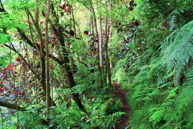 Tropical rainforest Mount Aorai hike Tahiti French Polynesia