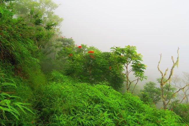 Walking in clouds Mount Aorai hike Tahiti French Polynesia