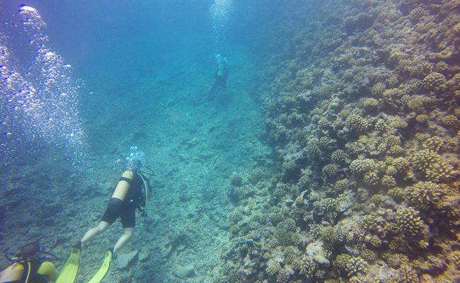 Diving in Moorea through lagoon pass