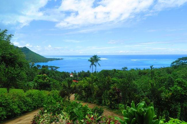 Moorea tropical garden view