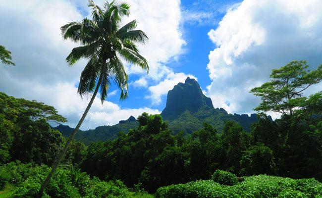 Opunohu Valley hike Moorea French Polynesia view of mountain