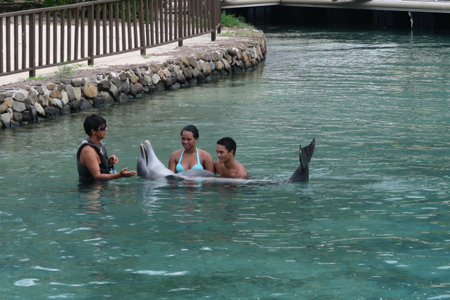 Playing with dolphins at Dolphin center Intercontinental Resort Moorea