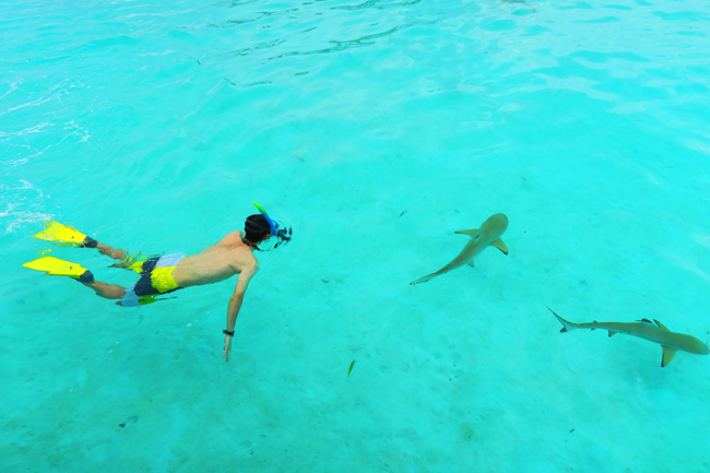 Shark and stingray feeding Moorea French Polynesia