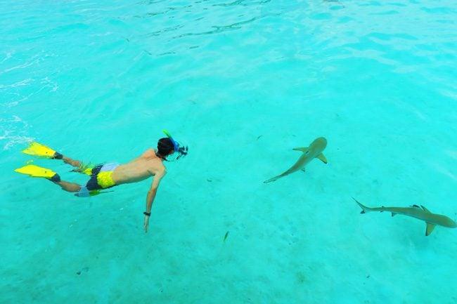 Shark and stingray feeding Moorea French Polynesia