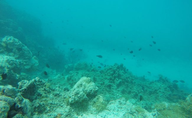 Snorkeling off Mareto Beach Moorea French Polynesia 2