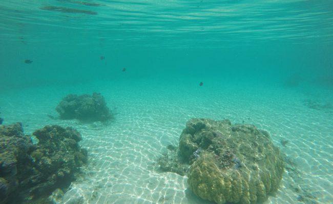 Snorkeling off Temae Beach Moorea French Polynesia 1