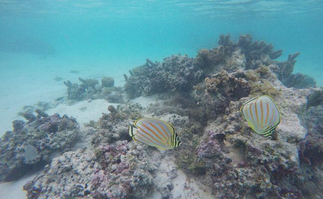 Snorkeling off motu beach Moorea French Polynesia 1