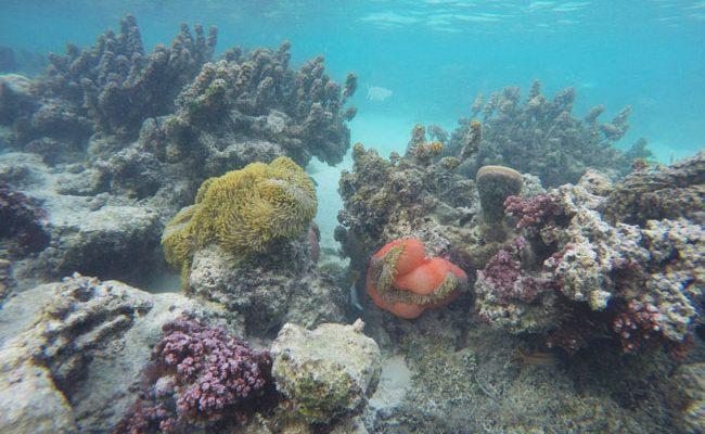 Snorkeling off motu beach Moorea French Polynesia 2
