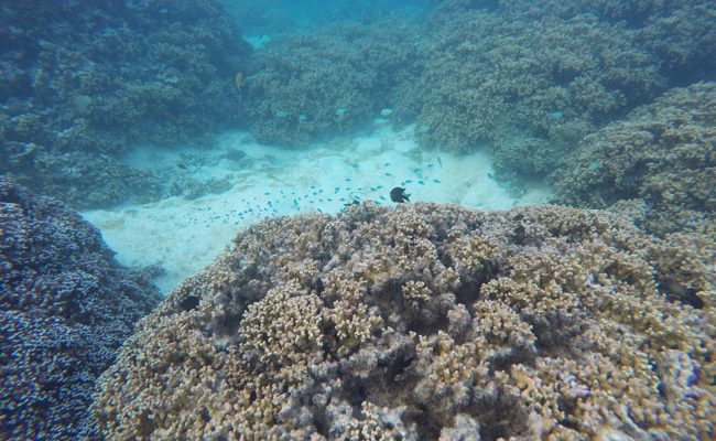 Snorkeling off motu beach Moorea French Polynesia 5