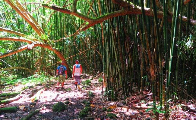 Three coconuts hike Moorea French Polynesia giant bamboo