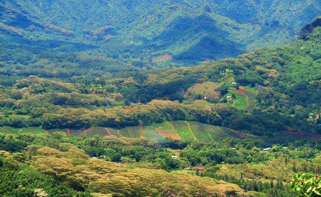 Vaiare to Pao Pao hike Moorea French Polynesia pineapple fields