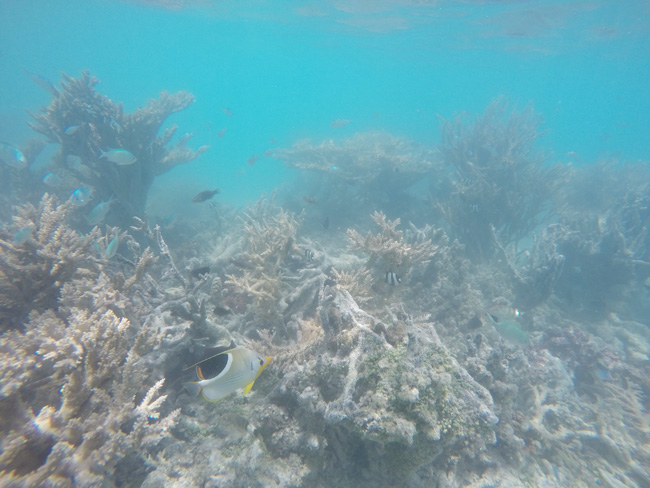 Coral off Motu Auira Maupiti French Polynesia 4